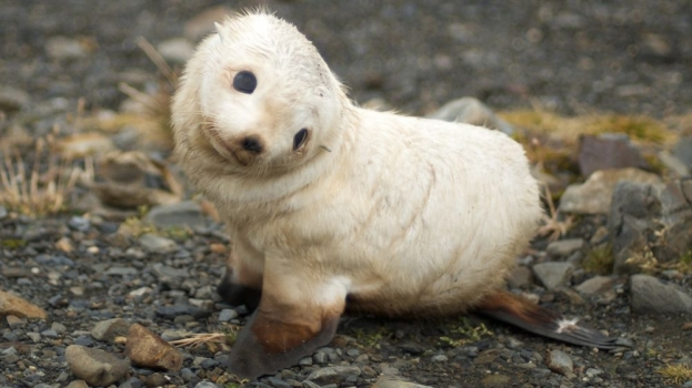Baby-seal-animals-7905896-1920-1080.jpg