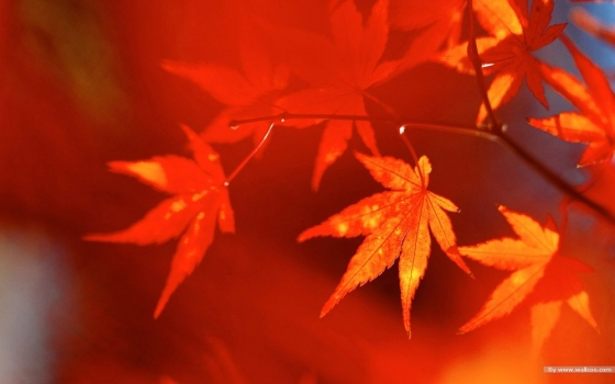 Fall_Secenry_Autumn_Leaves_162429.jpg