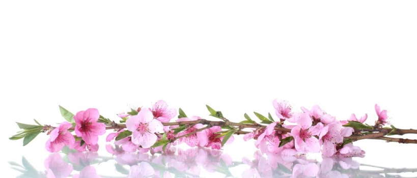 1152x864 rosas con efectos - photo #30