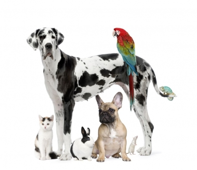 Group_of_pets__Dog_cat_bird_reptile_rabbit_muralesyvinilos_12988618__Monthly_XL.jpg