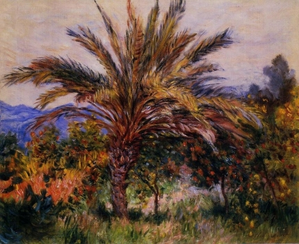 a_palm_tree_at_bordighera.jpg