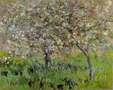 apple_trees_in_bloom_at_giverny.jpg