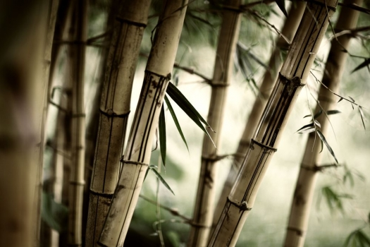 bosque_de_bambu_muralesyvinilos_29973441__Monthly_XL.jpg