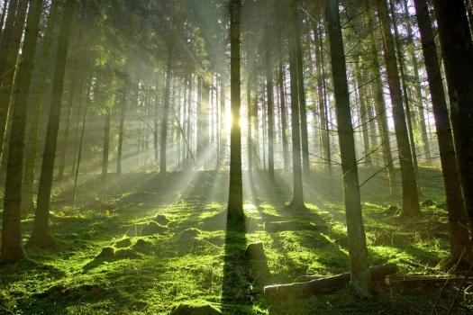 bosque_luz_muralesyvinilos_7080518__L.jpg