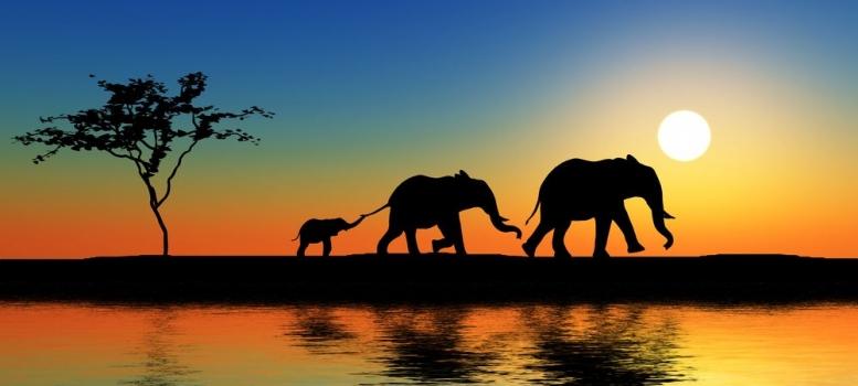 Foto mural familia de elefantes animales ref 15223089 for Mural una familia chicana