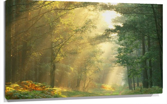 0Sun_Rays_in_the_Forest_Germany.jpg