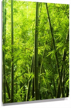 Bosque_de_bambu_muralesyvinilos_16267023__Monthly_XL.jpg