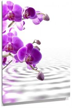 Orquideas_muralesyvinilos_30938637__Monthly_XL.jpg