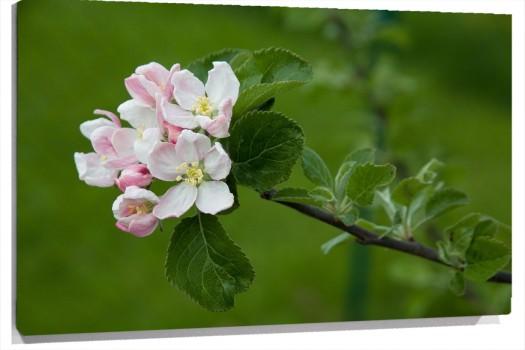 flores_blancas_y_rosas_muralesyvinilos_14699624_XL_1.jpg