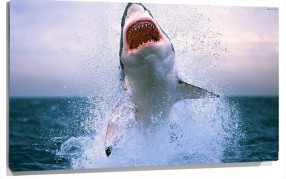 Murales Salto del Tiburon