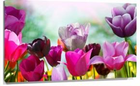 Murales Flores de colores