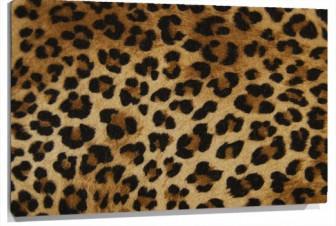 Lienzo Piel leopardo