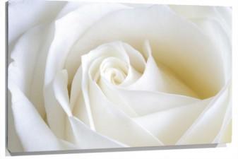 Lienzo flor blanca