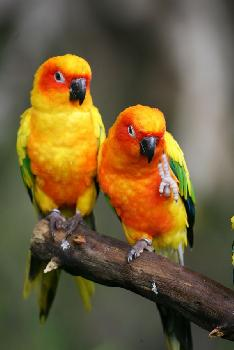 loros_Fotolia_5729003_Subscription_XL.jpg