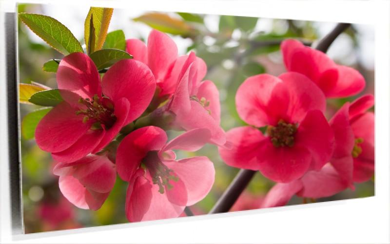 951281_Flores_Rosas.jpg