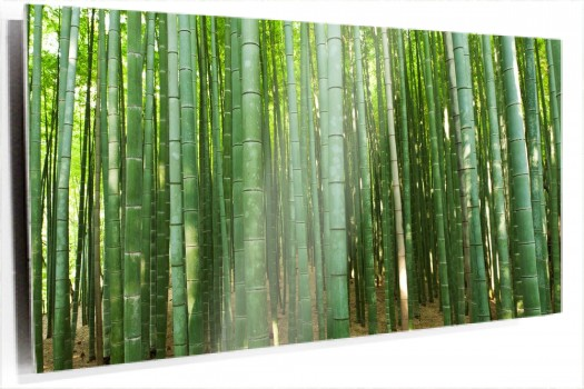 Bosque_bambu_muralesyvinilos_36820451__Monthly_XL.jpg