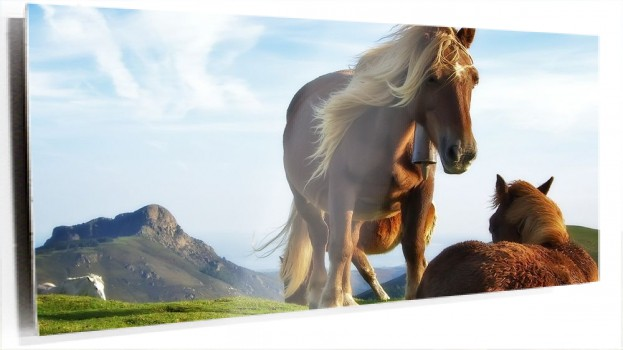Horse--mountain-horses-animal-grass-green-bluesky-colour-photoshop-desktop-wallpaper-1920x1080.jpg