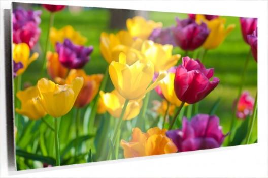 Tulipanes_amarillos_y_morados_muralesyvinilos_33072028__Monthly_XL.jpg