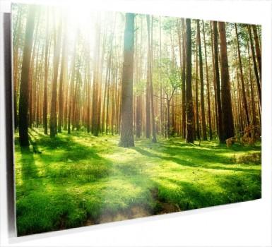 bosque_suelo_verde_368++3.jpg