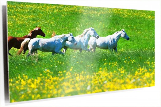 caballos_Fotolia_13694540_Subscription_L.jpg