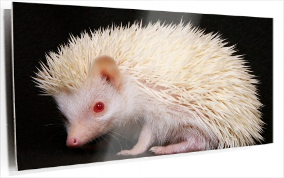 little-hedgehog-wallpapers_8118_1920x1200.jpg
