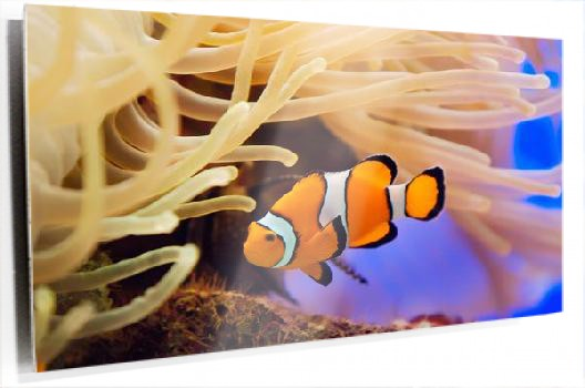 nemo_Fotolia_1915433_Subscription_XL.jpg