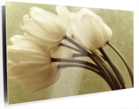 tulipanes_blancos_muralesyvinilos_26427985.jpg