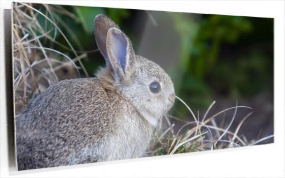 wild-rabbit.jpg