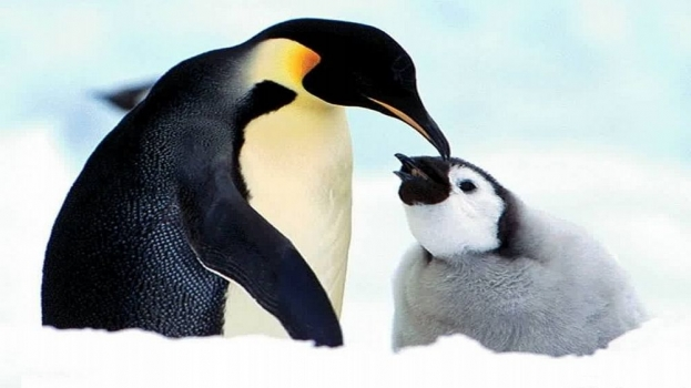 penguin-baby-animal-photo.jpg