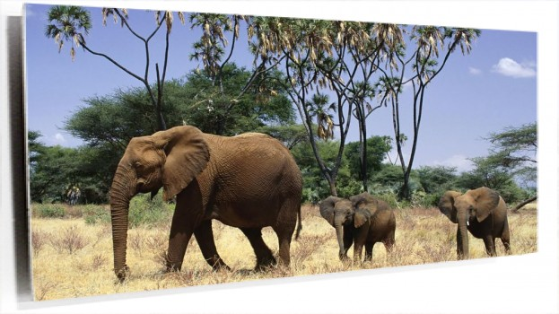 Elephants_Family.jpg