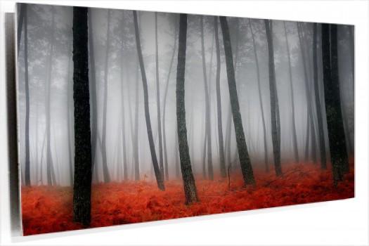 bosque_gris_y_rojo_muralesyvinilos_22084396.jpg