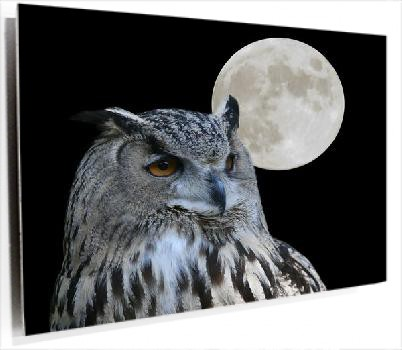buho_luna_plata_Fotolia_460697_Subscription_L.jpg