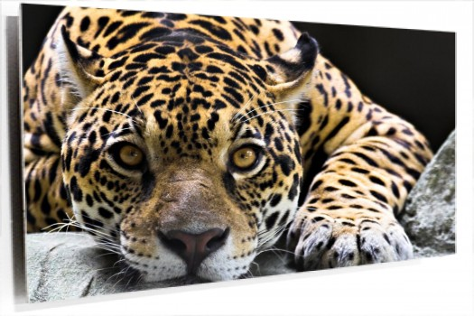jaguar_muralesyvinilos_2604772__Monthly_XL.jpg