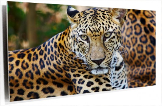 leopardo_muralesyvinilos_3030169__Monthly_L.jpg