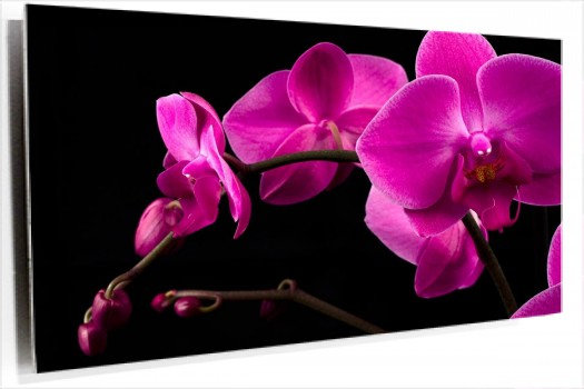 rama_flores_fondo_negro_muralesyvinilos_11479576_1.jpg