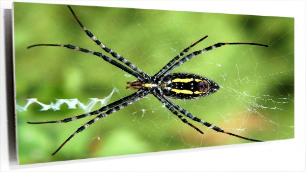 spider-black-yellow-animal-wallpaper.jpg