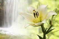 Murales Flor y cascada