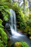 Murales cascada en bosque