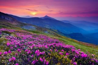 Murales montaña con flores fuxias