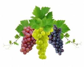 Murales racimos de uvas